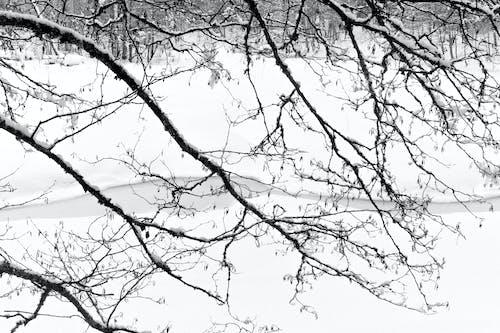 Photos gratuites de arbre, bois, branche
