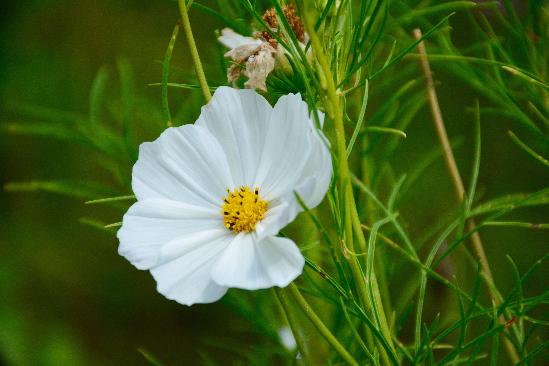 Photos gratuites de centrale, centrales, fleur, fleurir
