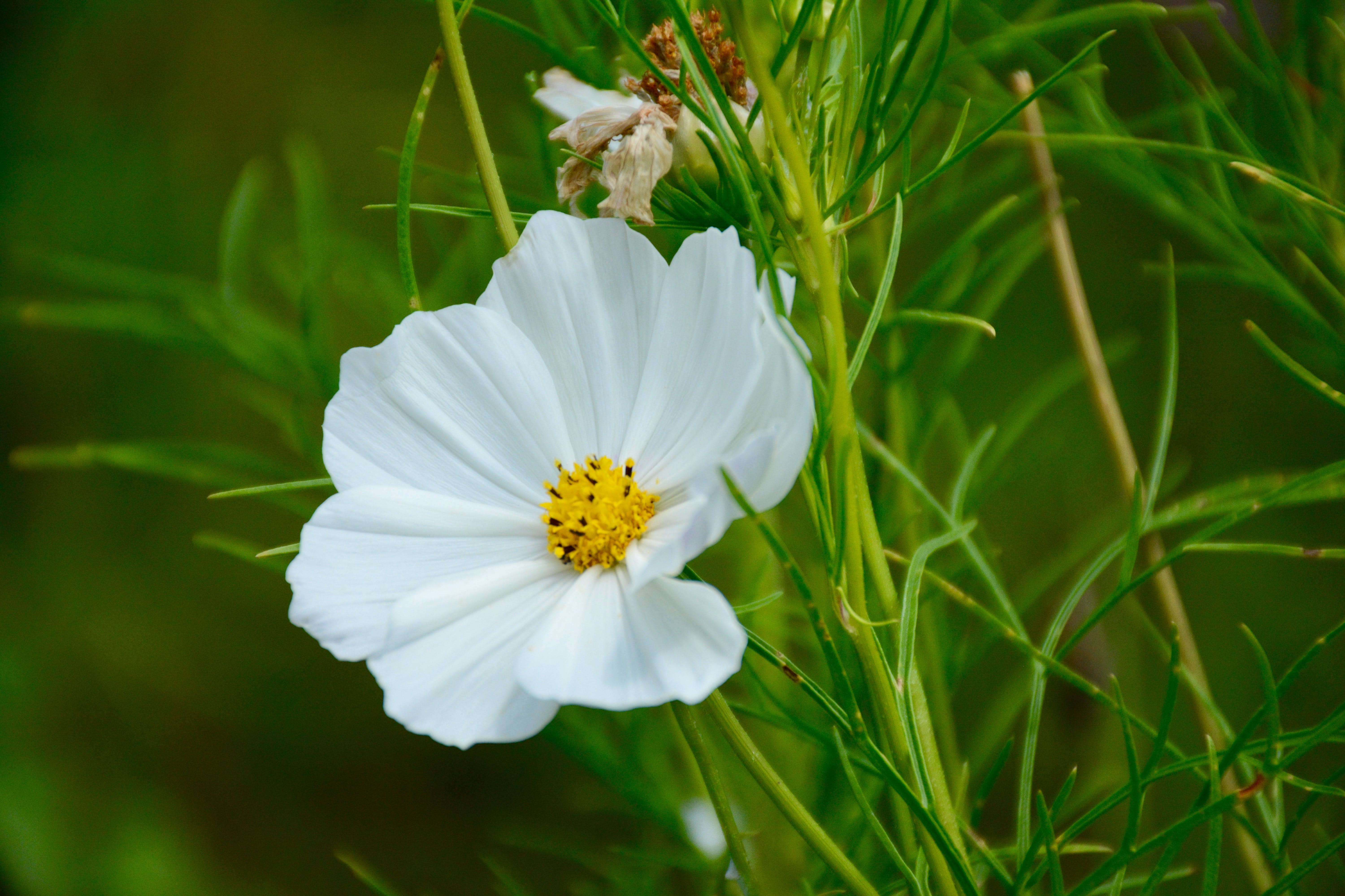 Selective Focus Photography of White Petaled Flowering Plant
