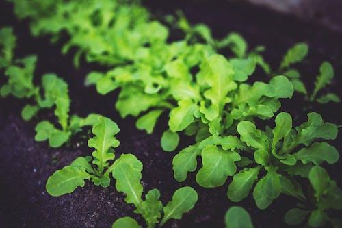 Ingyenes stockfotó botanikus, buja, egészséges, élelmiszer témában