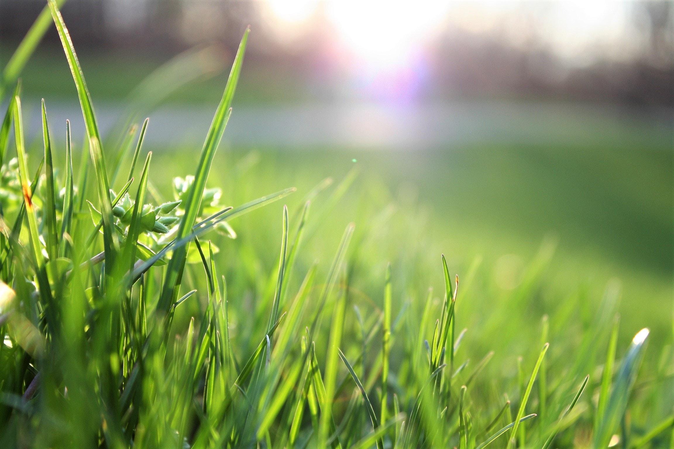 Macro Shot Of Grass Field Free Stock Photo