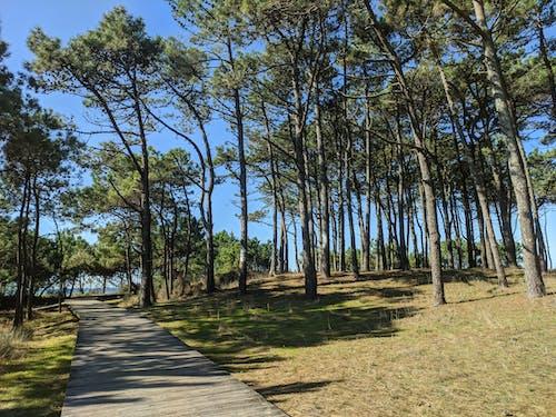 公園, 小徑, 森林 的 免費圖庫相片