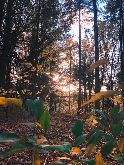 Free stock photo of leafs, sunlight, sunshine