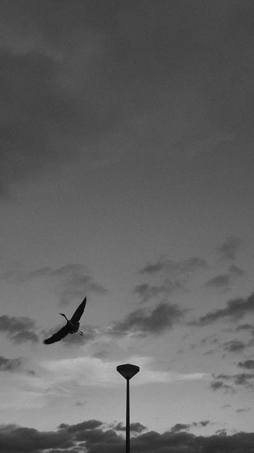 Grayscale Photo of a Bird Flying