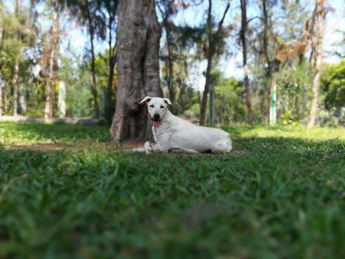 Immagine gratuita di cane amore ðÿ ¾