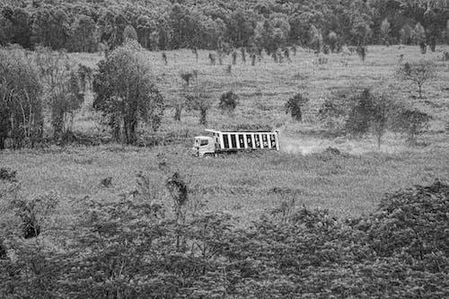 Photos gratuites de fond de forêt, grand camion