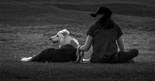 Fotos de stock gratuitas de amante de los perros, animal peludo, blanco y negro