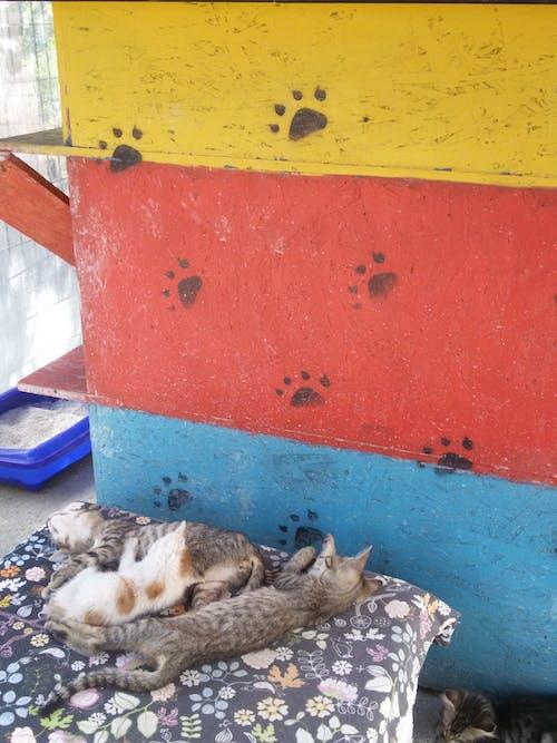 Free stock photo of cats, Istanbul's Avcılar, Istanbul's cats
