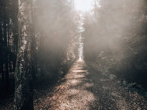 Fotos de stock gratuitas de atmosfera de outono, bosque de otoño, niebla