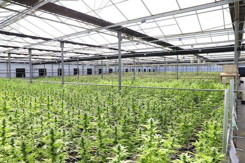 Green Plants Inside Greenhouse