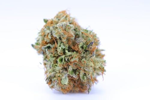 Free stock photo of cannabinoid, cannabis, cannafornia