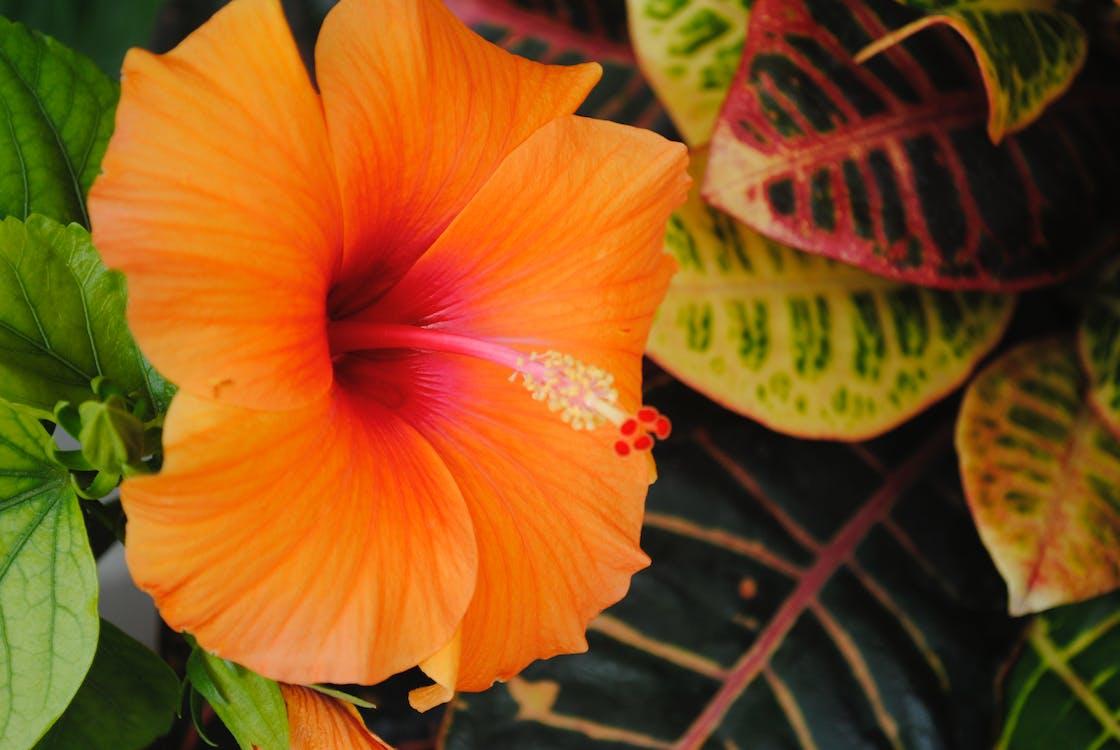 Free stock photo of beautiful flowers, greenery, relaxing