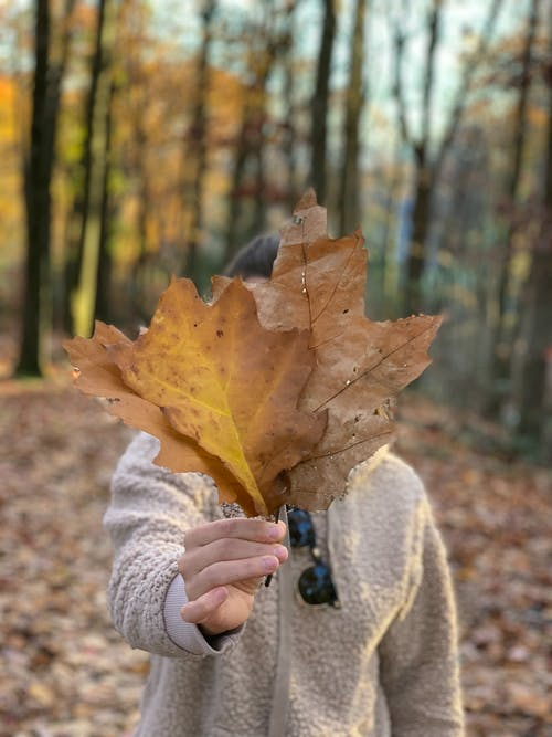 Free stock photo of autumn beauty, autumn leaf, autumn leaves