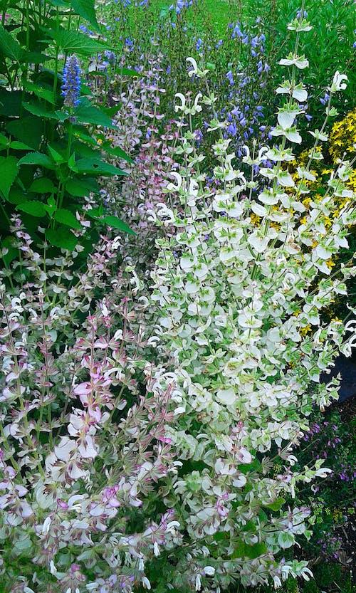 Free stock photo of beautiful flowers, breathtaking beauty