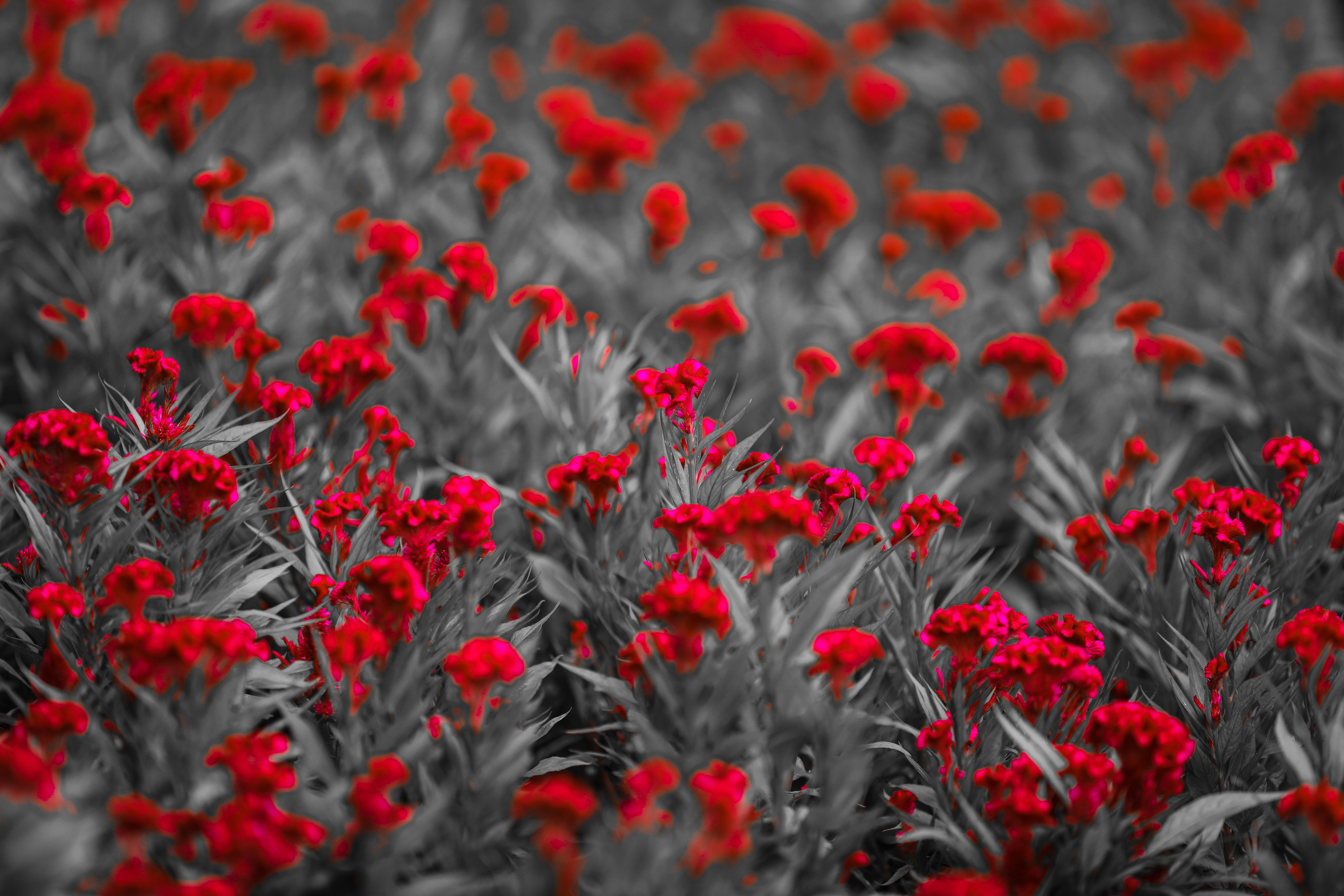 Free stock images with the color Red (#ff0000)