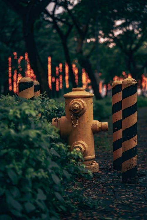 植物, 歩道, 消火栓の無料の写真素材