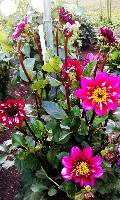 Free stock photo of fresh flowers