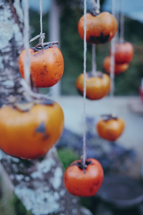 Persimmon hanging on tree in nature