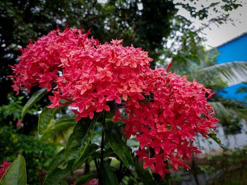 Free stock photo of nature, photographyinnature