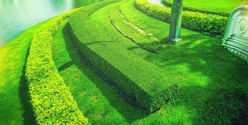 Foto stok gratis cuaca bagus, hijau, kebun, rumput