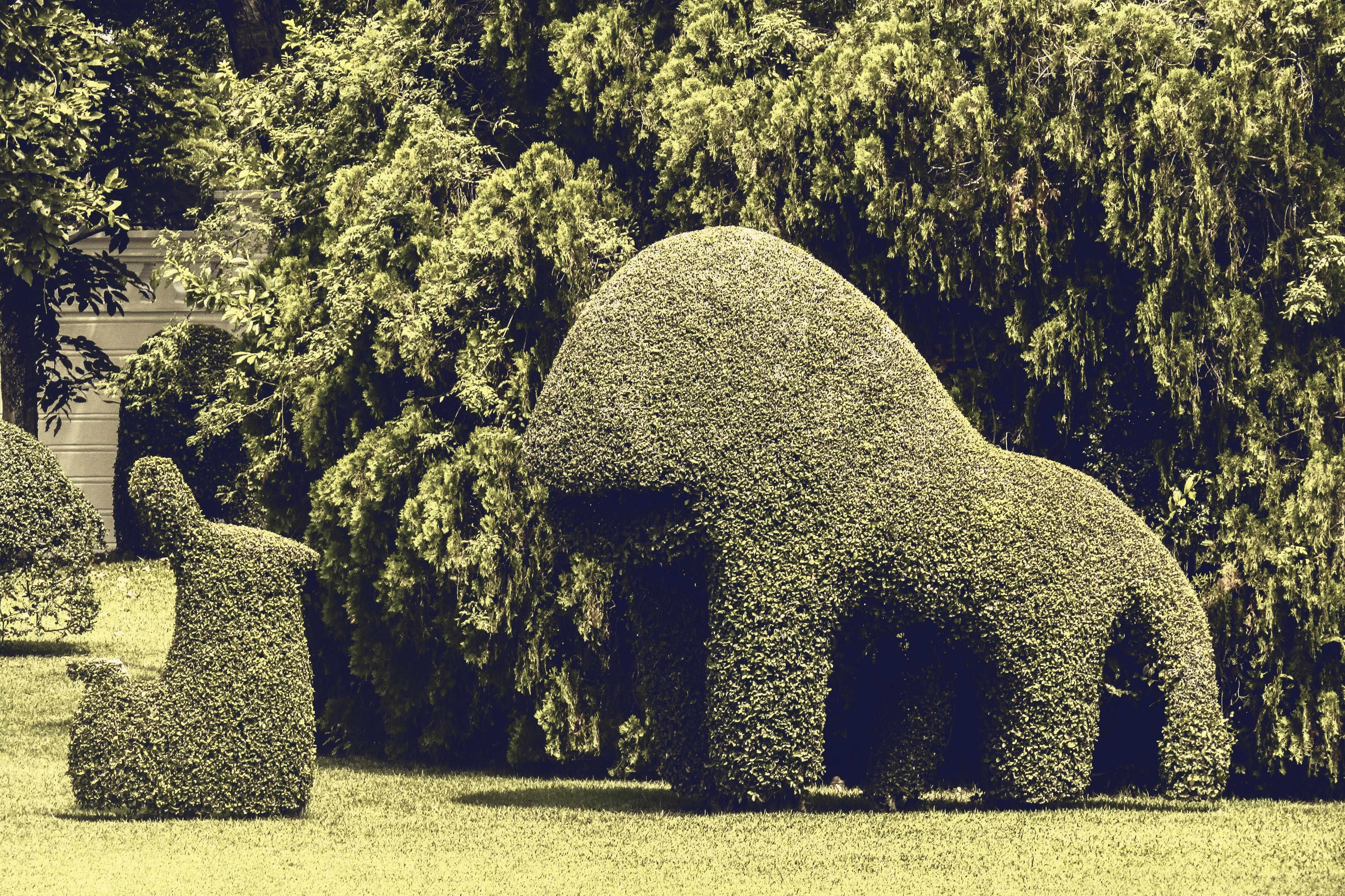 Two Animal Topiary on Garden