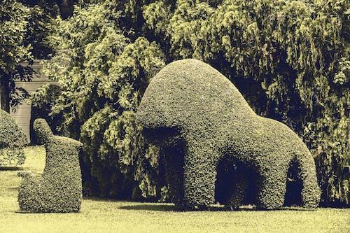 Foto stok gratis cuaca bagus, cute, halaman rumput, hijau