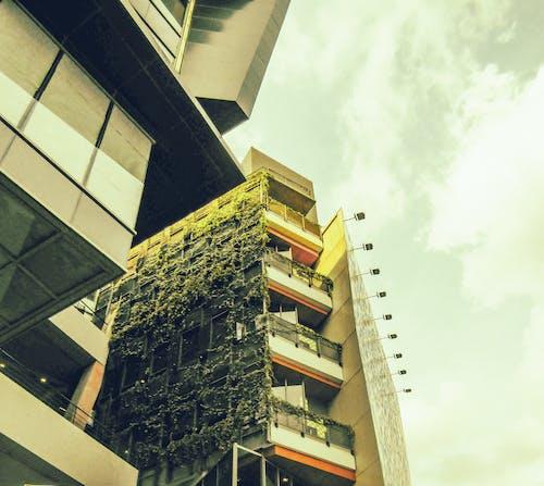 Δωρεάν στοκ φωτογραφιών με κτίριο διαμερισμάτων, φυτά στον τοίχο, φως της ημέρας