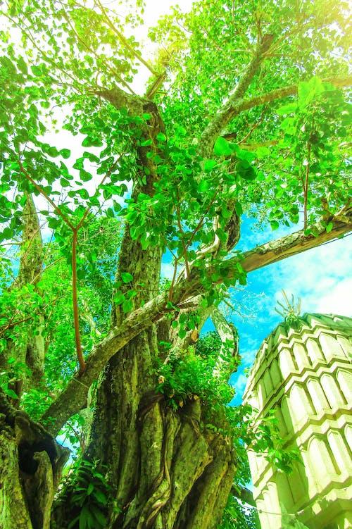 Δωρεάν στοκ φωτογραφιών με δέντρα, ηλιόλουστη μέρα, κήπος, κλαδί