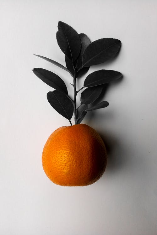 Top view of fresh bright ripe whole orange with green leaves on white background in light studio during harvest season