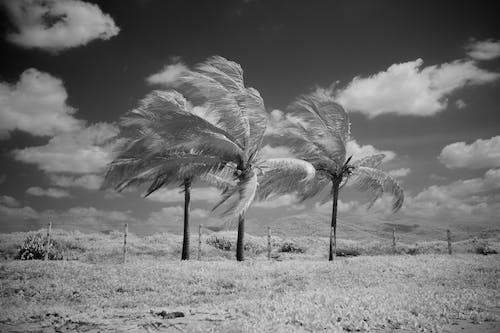 Foto stok gratis alam, alami, angin
