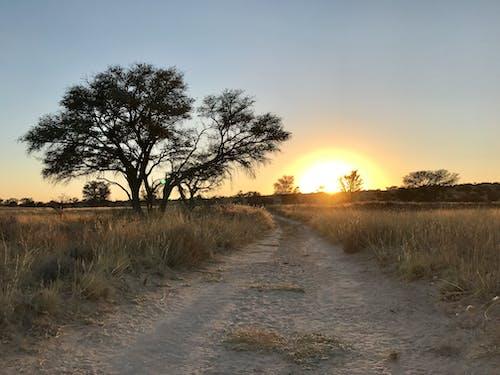 Fotos de stock gratuitas de África, amanecer, arboles, arbustos