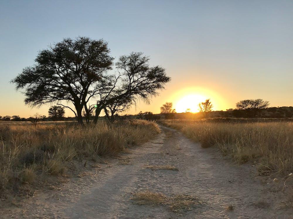 África, amanecer, arboles