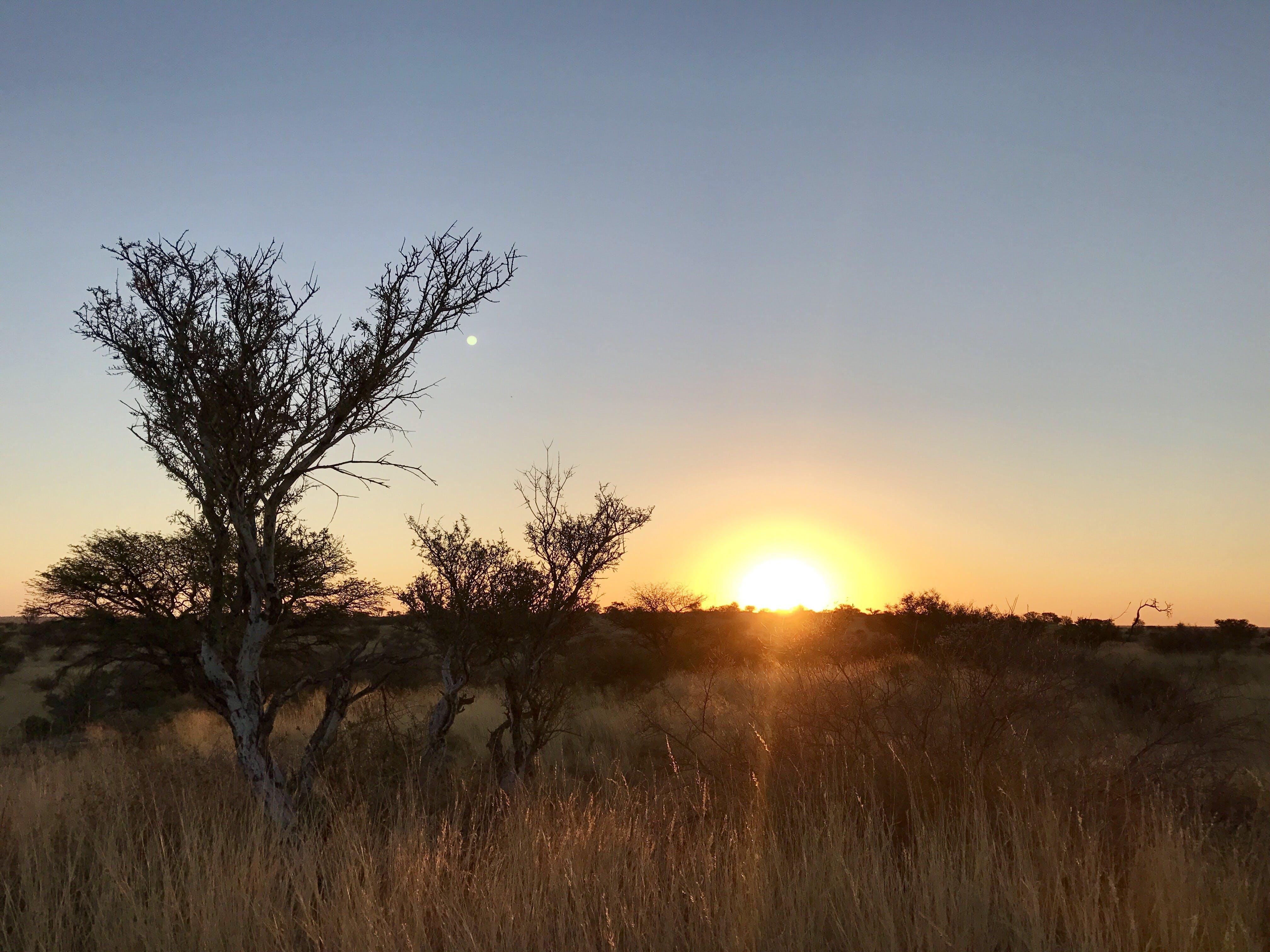Free stock photo of africa, bushes, grass, kalahari