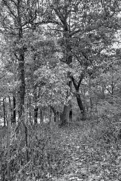 Δωρεάν στοκ φωτογραφιών με ασπρόμαυρη φωτογραφία, μονοπάτι πεζοπορίας, φύλλα πτώσης