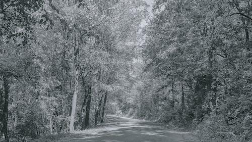 Δωρεάν στοκ φωτογραφιών με ασπρόμαυρη φωτογραφία, πεσμένα φύλλα, φθινόπωρο δρόμο