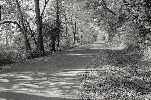 가을 길, 단풍, 시골 길의 무료 스톡 사진