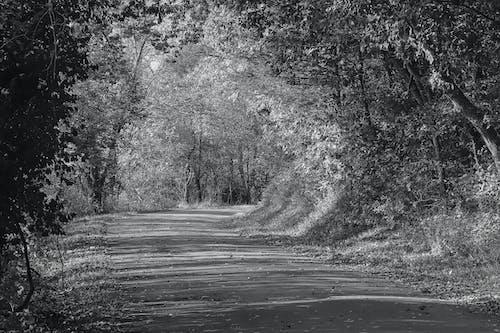 Δωρεάν στοκ φωτογραφιών με αγροτικό δρόμο, ασπρόμαυρη φωτογραφία, άσφαλτο