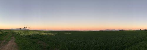 Fotos de stock gratuitas de África, arboles, brumoso, campo de trigo