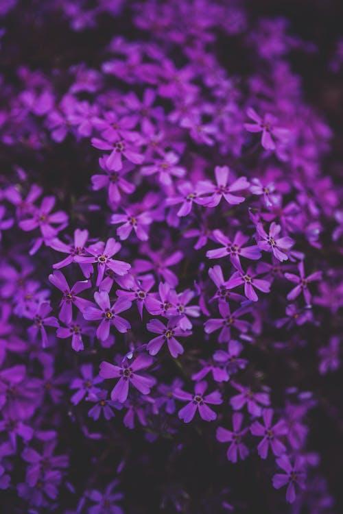 cánh hoa, hayfield, hệ thực vật