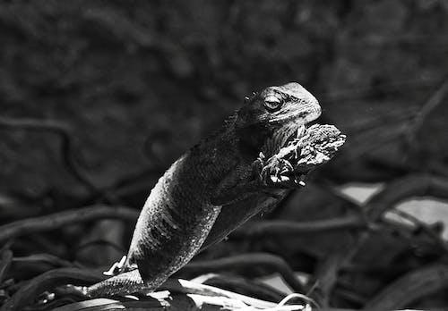 Free stock photo of animal photography, basic, exotic animals