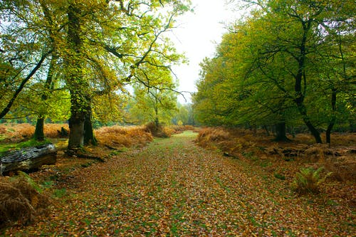 Fotos de stock gratuitas de árboles verdes, bosque, caer