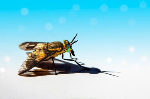 Black and Yellow Fly on White Surface