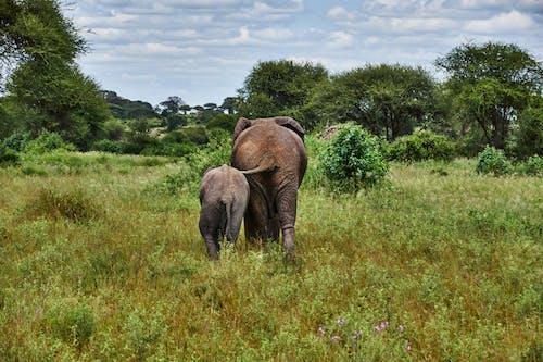 Brown Elephants Walking Away on Green Grass Field