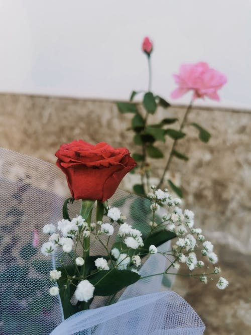Bright blooming roses and gypsophila near wall