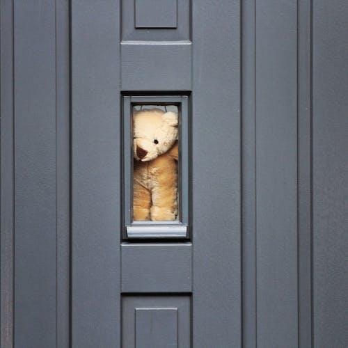 Brown Short Coated Dog on Black Wooden Door