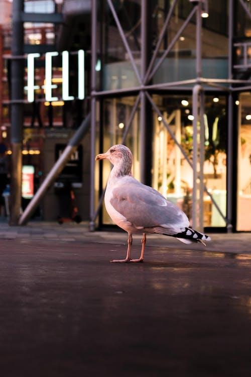 White Seagull On Concrete Pavement