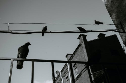 Pigeons on electricity wires under sky