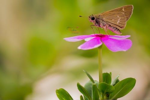 Fotos de stock gratuitas de flor, mariposa