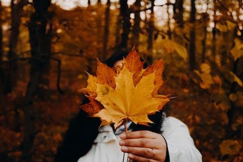 Foto stok gratis cahaya, cewek, daun