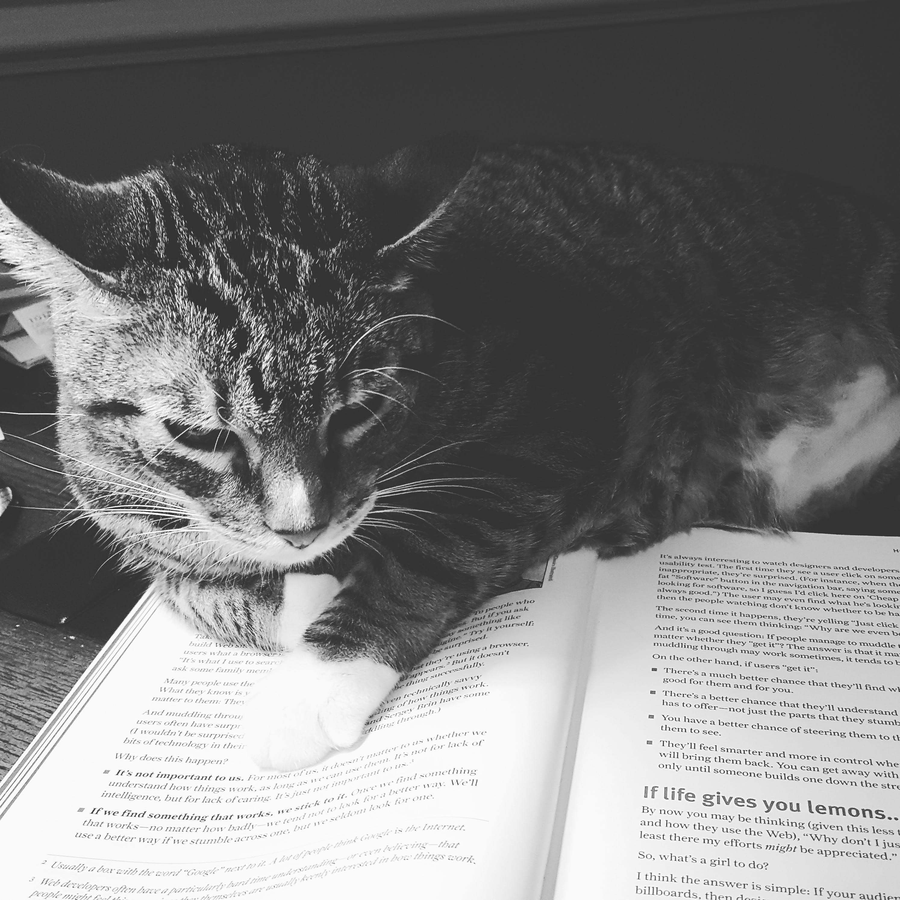 Tabby Cat on Open Book